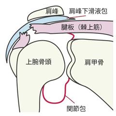 腱板損傷の障害の症状と治療および予防法